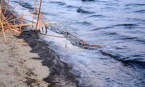jezioro tarnobrzeskie_rozwielitki