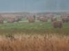 rykowisko-20130002