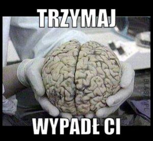 mózg.jpg